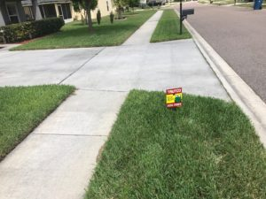 Jacksonville lawn care tips
